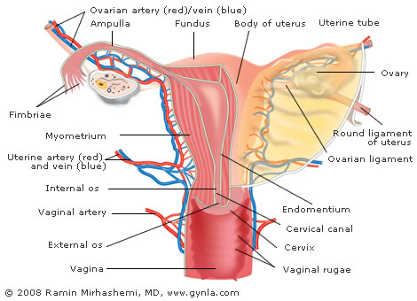 Uterine Cancer / Endometrial Cancer